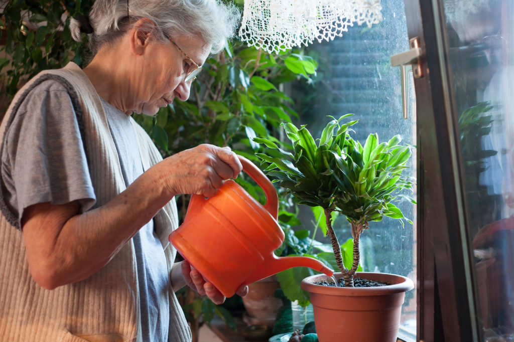 Watering house plants